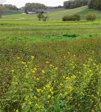 Gnojila in gnojenje v ekološkem kmetovanju