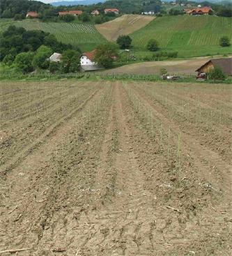 Podpora za prestrukturiranje in preusmeritev vinogradov – ROKOVNIK