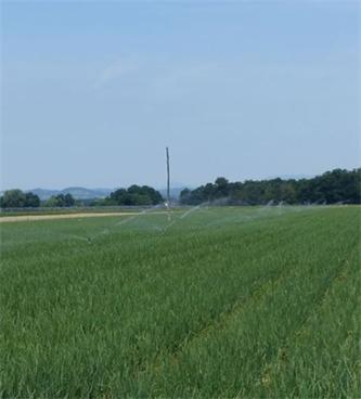 Kako preprečujemo sušo v vrtnarski pridelavi?