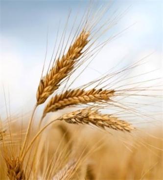 Usposabljanje za poljedelca/poljedelko in zelenjadarja/zelenjadarico