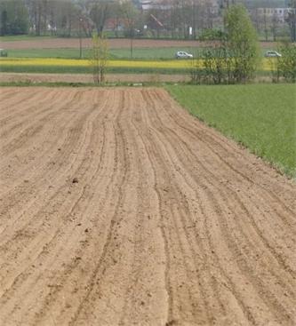 Obvestilo o zatiranju plevelov v koruzi