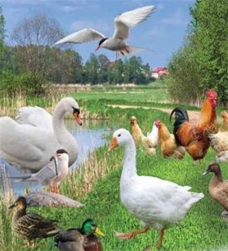 Ukinitev ukrepov zaradi aviarne influence
