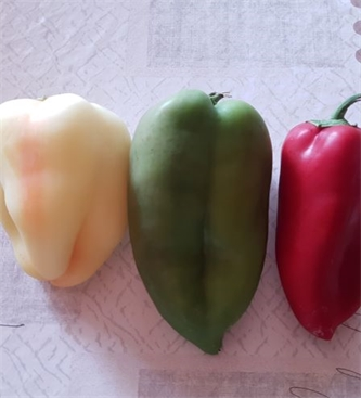 Obvestilo o zatiranju gosenic na papriki
