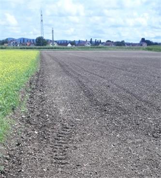 Obvestilo o zatiranju plevelov v oljni ogrščici