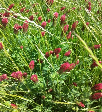 Pomen pravočasne setve trav, detelj in travno-deteljnih mešanic